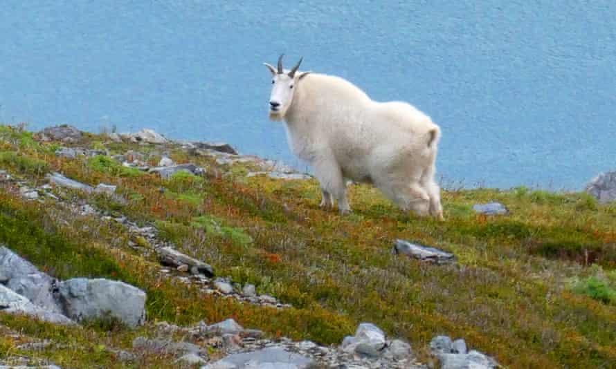 A mountain stands on a ridge in Juneau, Alaska.