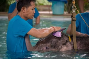 A handler washes Clear Sky after her therapy session