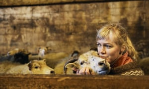 Heida with her sheep in the barn