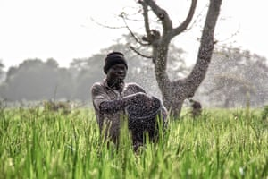Farmer spreading fertiliser on his rice crop, northern Ghana, by Anais VoskiFinalist: Action