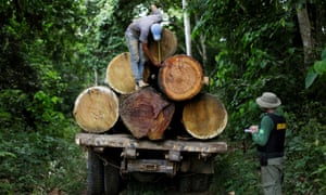 An Ibama agent measures a tree trunk during an operation to combat illegal mining and logging in the municipality of Novo Progresso, Para State, northern Brazil