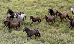 Wild horses gallop in Amajari in the Amazon city of Boa Vista in the north-west state of Roraima in Brazil