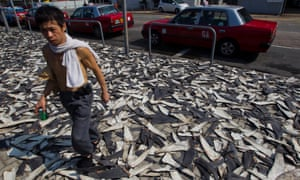 Thousands of shark fins are laid out to dry on a street in Hong Kong.
