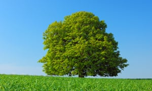 Family tree … taking photographs of a Horse chestnut tree becomes a family tradition in The Overstory. Photograph: Alamy