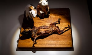 Cuy (guinea pig), an exhibit at the Disgusting Food museum in Malmo, Sweden.