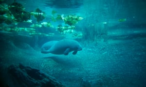 Pool space is scarce in Florida for newer arrivals of affected manatees, dolphins and sea turtles.