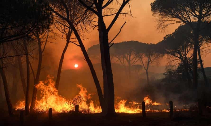 The wildlife burning in forests near the village of Gonfaron, in the department of Var, France.