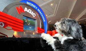 Hugo, at the paw end of the demographic, tests out a new Metro bank branch in Holborn, London.