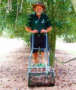 Macadamia grower Ian McConachie harvesting his crop in 2008.