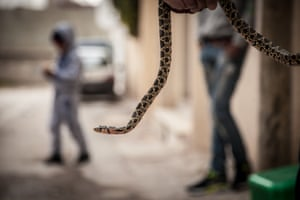 Children with snake on the streets of Tunis