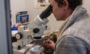 Lockhart examines a bryozoan under the microscope, collected from a submarine dive in Gerlache Strait