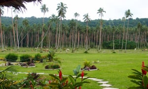 Cattle and coconut groves at Velit Bay Plantation