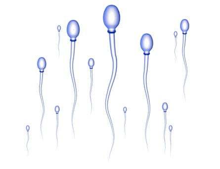 Sperm cells on their way to the egg