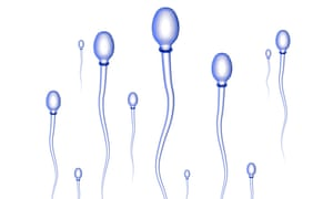 'Very few studies that look at male fertility have controlled for the age of their female partner.'