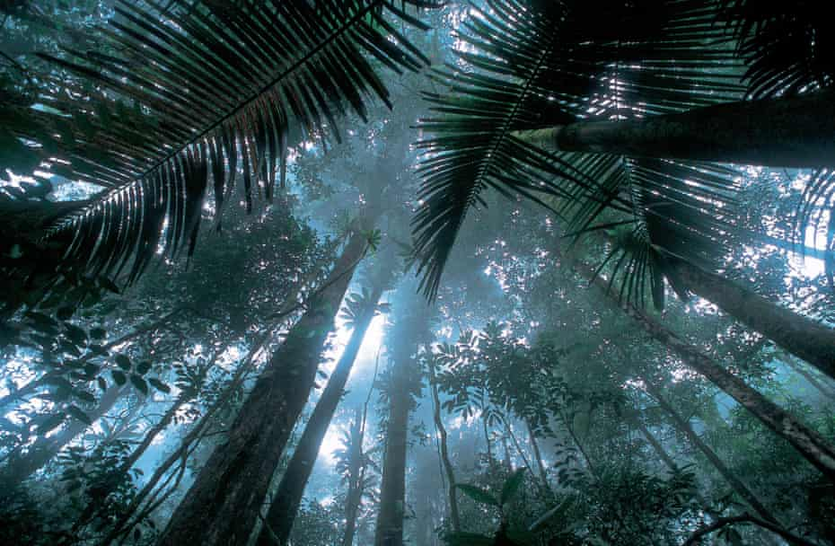 Matécho Forest, French Guiana. Younger trees fight to occupy gaps in the canopy opened by disturbances such as the death of mature trees.