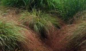 'New Zealand wind grass (Anemanthele lessoniana, formerly Stipa arundinacea) is a little undervalued.'