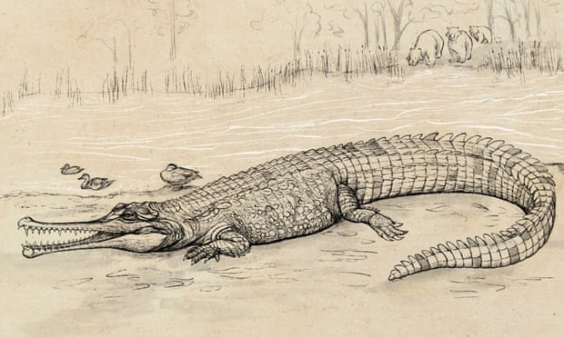 australia,Queensland,A prehistoric species of crocodile,Gunggamarandu maunala,Jorgo Ristevski,harbouchanews