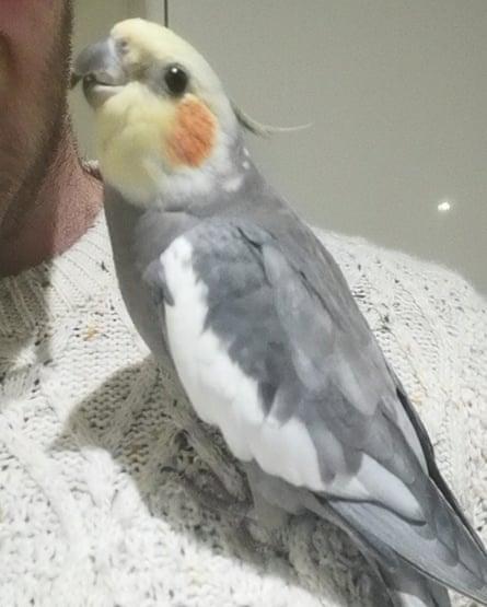 Leon's cockatiel Disco.