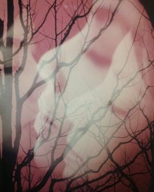 Early colour work of Masahisa Fukase