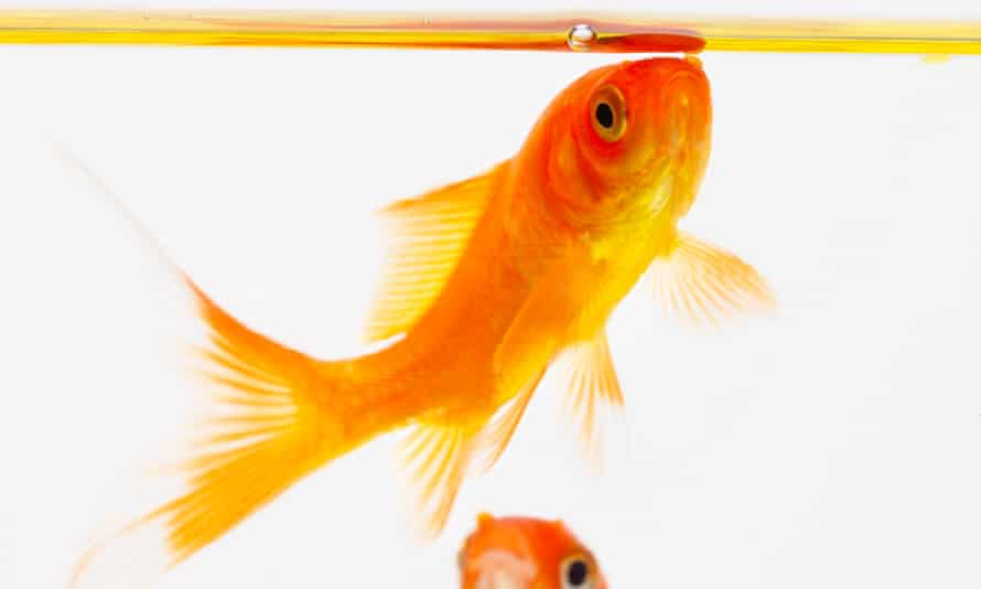 We are living in the web's goldfish bowl.