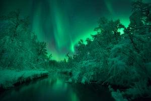 Green aurora illuminate snow-clad trees.