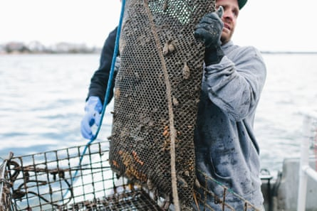 Bren Smith hauls oysters on Thimble Island, Connecticut