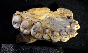 The fossil is an upper jawbone with several teeth; stone tools were also found nearby. Dating places the tools and jaw as being between 177,000 and 194,000 years old.