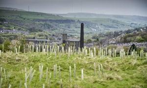 Freshly planted trees