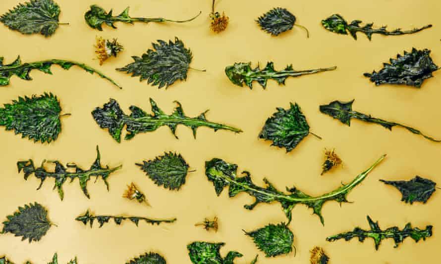Tom Hunt's roasted nettle and dandelion chips are the new kale crisps.