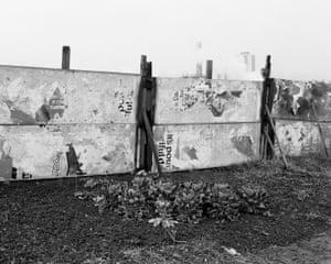 Sprouts on allotment, Dunston, Gateshead, 1977