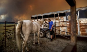 Hunter McKee pets Rosy after helping evacuate the horse to the edge of Lake Almanor, in California, United States, as the Dixie fire approaches.