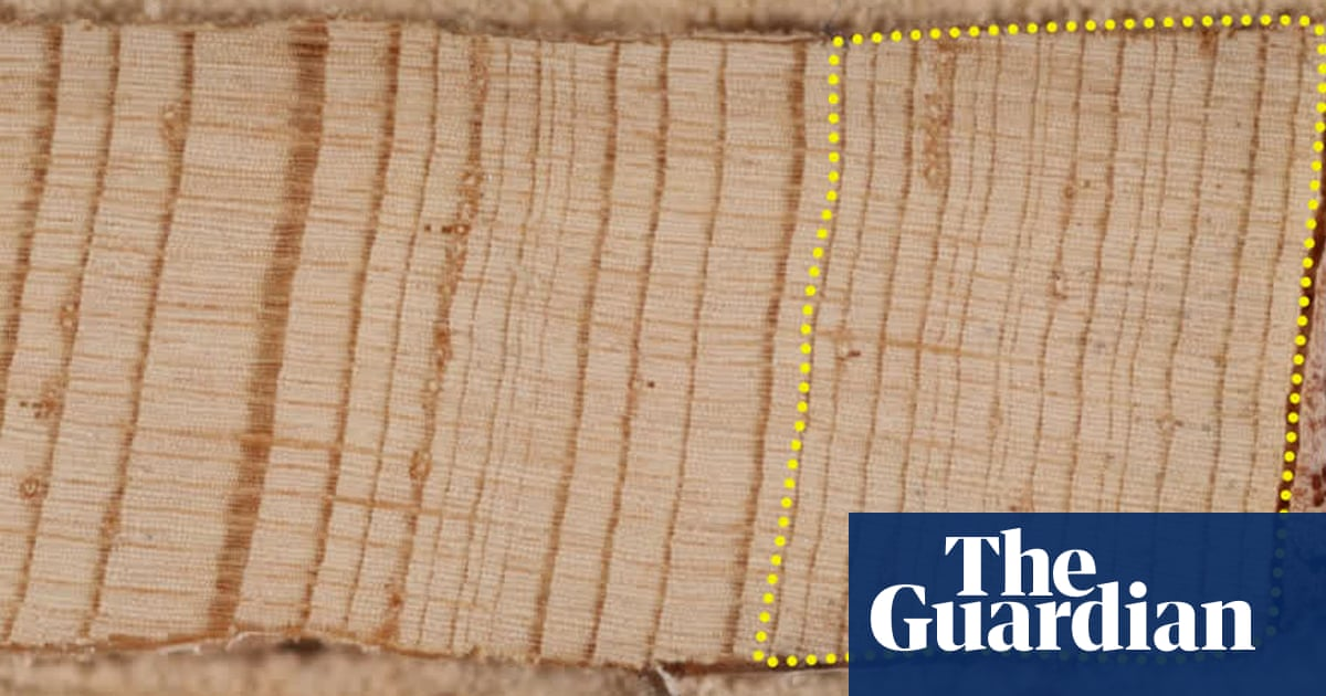 What tree rings reveal about America's megadrought – a visual guide
