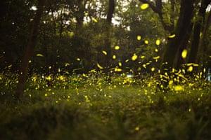 Fireflies dance in a park in Nanjing, China