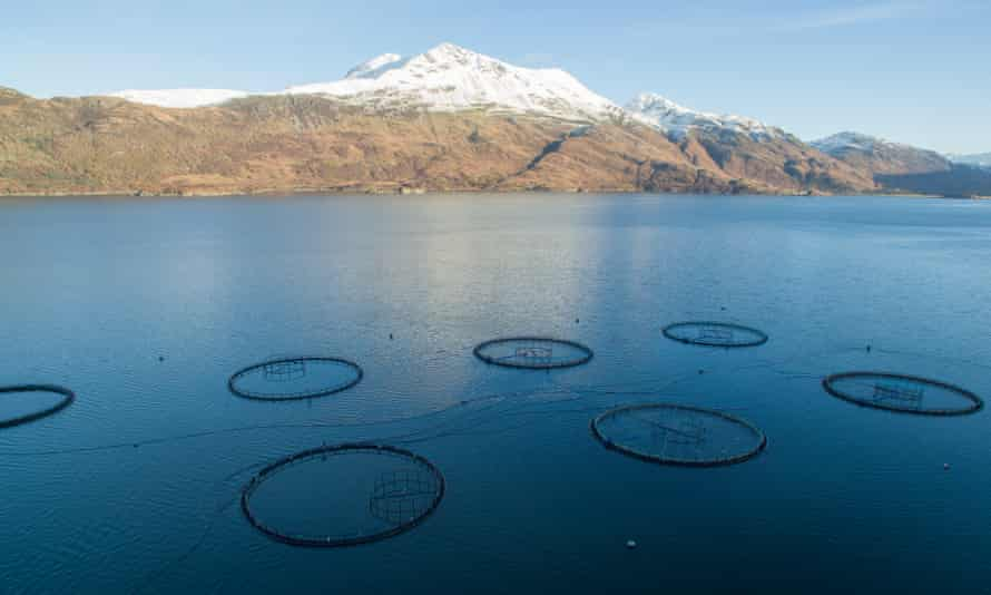 A salmon farm in Scotland run by Marine Harvest, one of the largest seafood companies in the world.