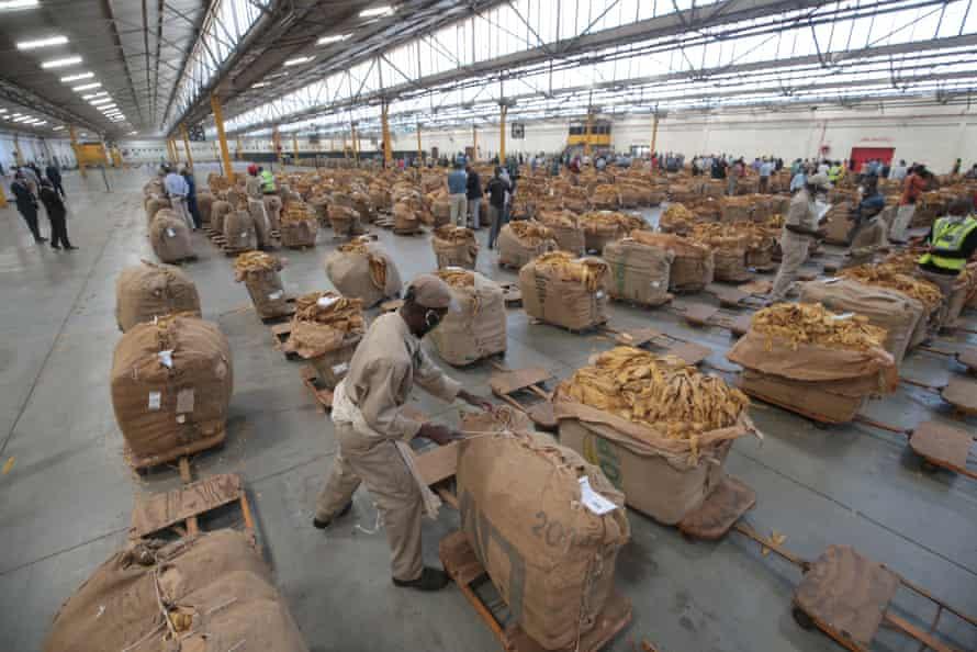 Tobacco Sales Floor in Harare, Zimbabwe, 07 April 2021