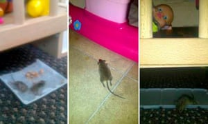 Mice and rats near children's toys.