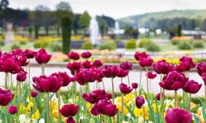 Trentham Gardens Bulb Festival