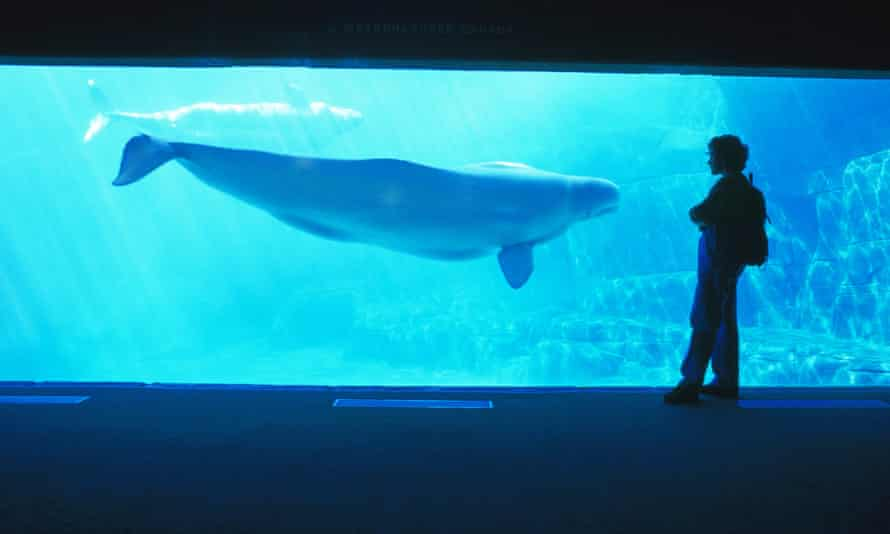 Two whales died just weeks apart at the Vancouver Aquarium in May.