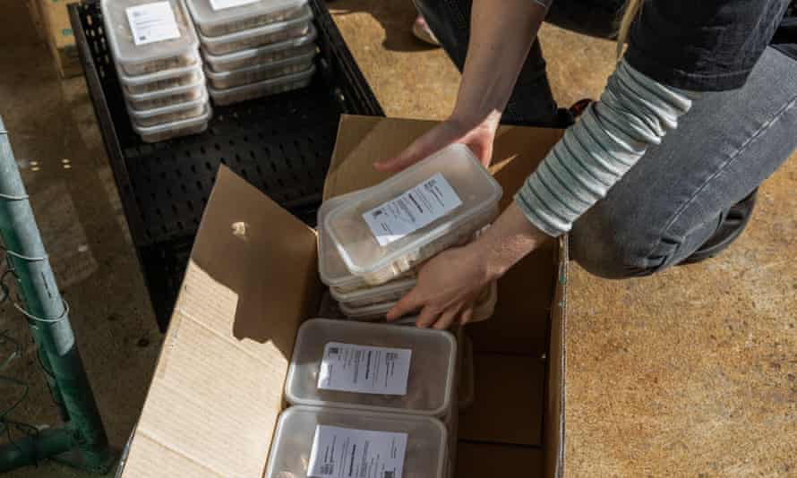 A charity worker packs food containers