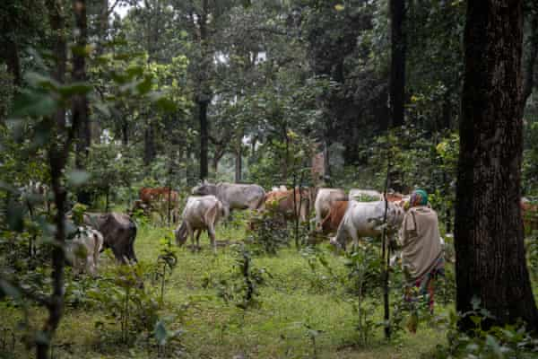 India S Ancient Tribes Battle To Save Their Forest Home From
