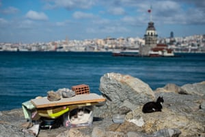 A shelter for stray cats with Istanbul's Maiden's Tower in the background