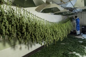The drying room of a cannabis farm in a nuclear bunker in Wiltshire.
