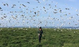 A warden monitors gulls on the island.