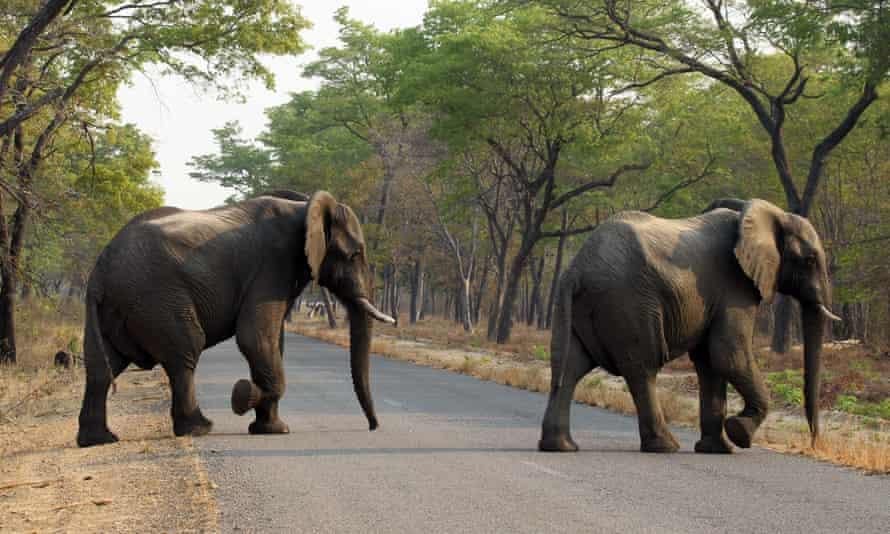 Elephants cross the road in Hwange national park on 1 October