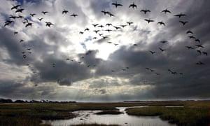A flock of birds.