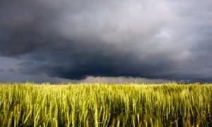 Grass in rural Oklahoma