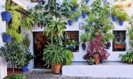 A patios in Cordoba come into their own during the Festival of the Courtyards.
