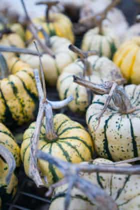 Well-known as fruit, squashes and melons can be referred to as berries in the strictest sense of the word, but don't try it at the grocers.