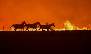 Horses flee the fires