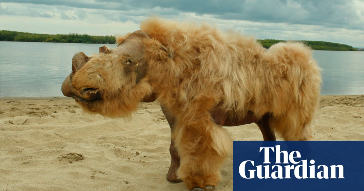 Climate change most likely cause of woolly rhino extinction – study